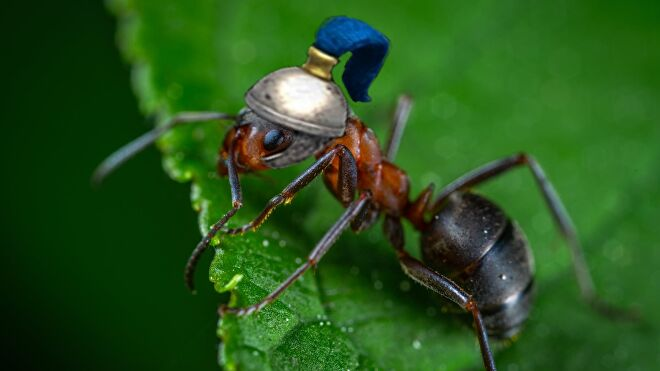 age of empires 2 ant with hat.jpg