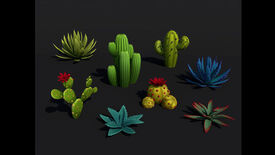 Image for Look At These Lovely Desert Succulents