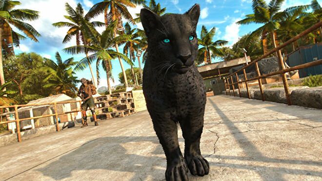 Far Cry 6: a close-up of the black panther Amigo named Oluso on a pier, with the protagonist Dani in the background.