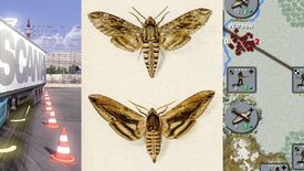 Image for The Flare Path: A Moth And A Mother