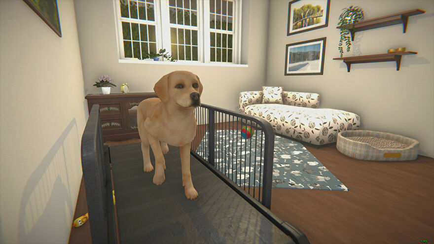 House Flipper - A golden lab walks on a treadmill in a living room with a dog bed, some hanging paintings, and other decor.