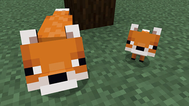 A Minecraft screenshot of an adult fox and a baby fox looking up at the player.