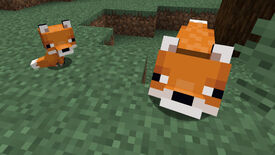 A Minecraft screenshot of an adult fox looking up at the player while a baby fox sits nearby.