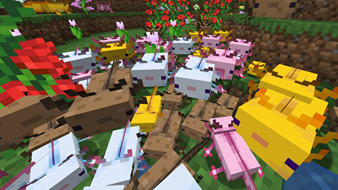 A Minecraft screenshot of many dozens of Axolotl of different colours crawling towards the camera.