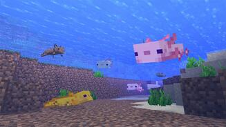 A screenshot from Minecraft's Caves & Cliffs update showing axolotls under water, looking happy, in various colours including pink, gold, brown and baby blue.