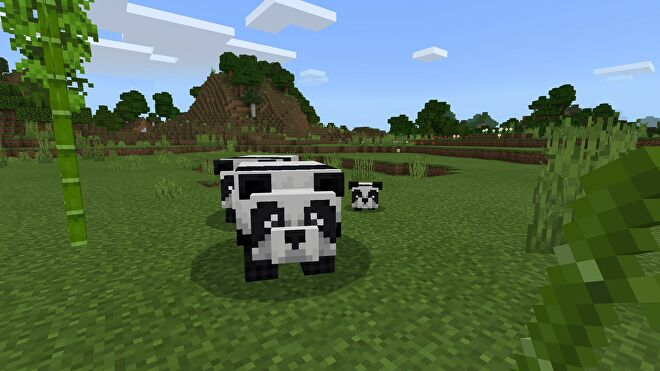 Minecraft adult pandas and a baby panda in plains biome near bamboo