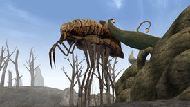 Image for Bethesda's Todd Howard isn't keen to remaster Morrowind