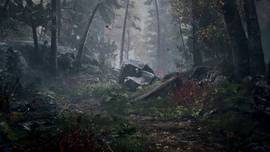 Prologue- A dark and rainy forest with rocky outcroppings