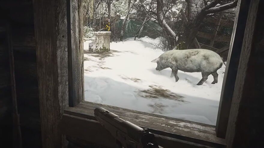 An image of the player looking at a large white pig in Resident Evil Village.