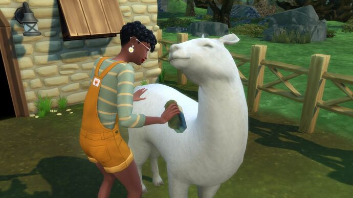 A female Sim, with dark skin, short cropped hair and wearing yellow dungaree shorts, brushes clean her llama. The llama looks incredibly happy.