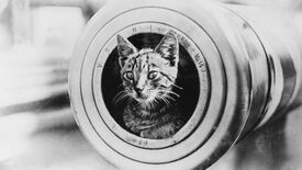 Image for The Flare Path: High Calibre Cat Pictures