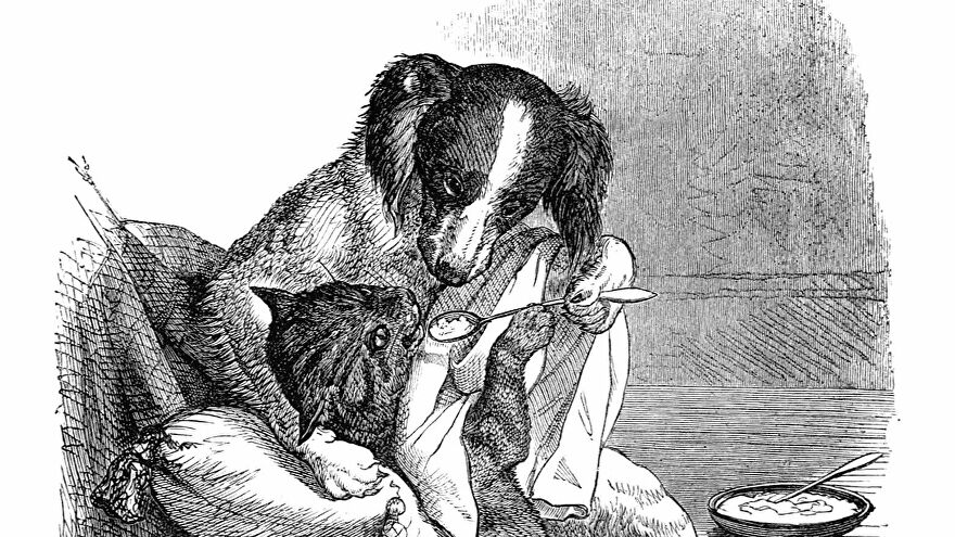 A black and white illustration of a dog - a spaniel - feeding a tabby cat with a spoon.